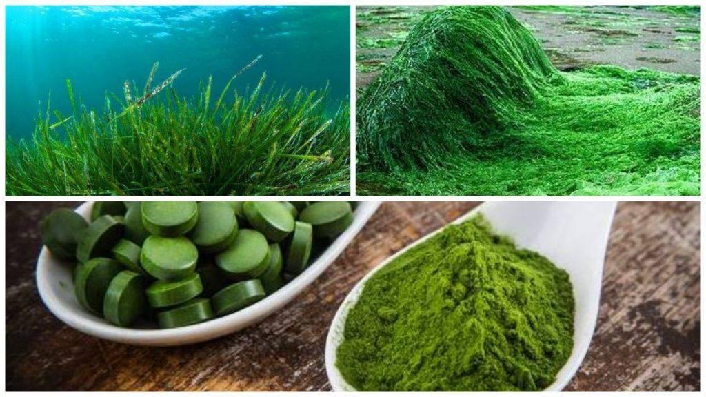 Омега-3 из водорослей для вегетарианцев