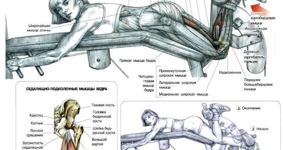 Сгибание ног в тренажёре: как правильно делать и чем их можно заменить