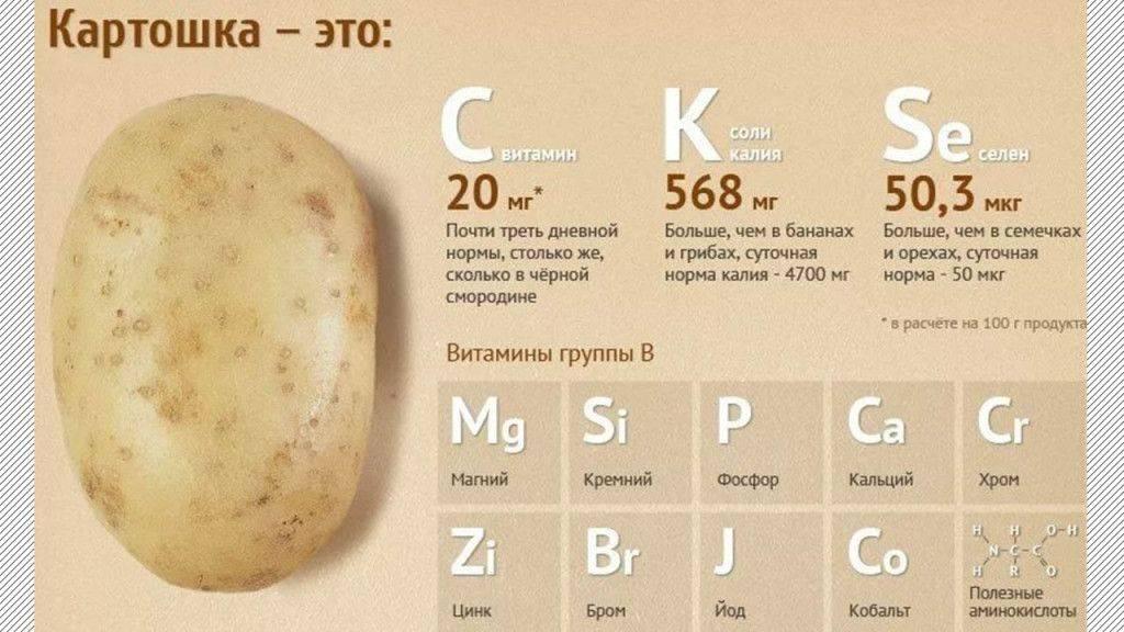 Какова калорийность картофеля на 100 грамм