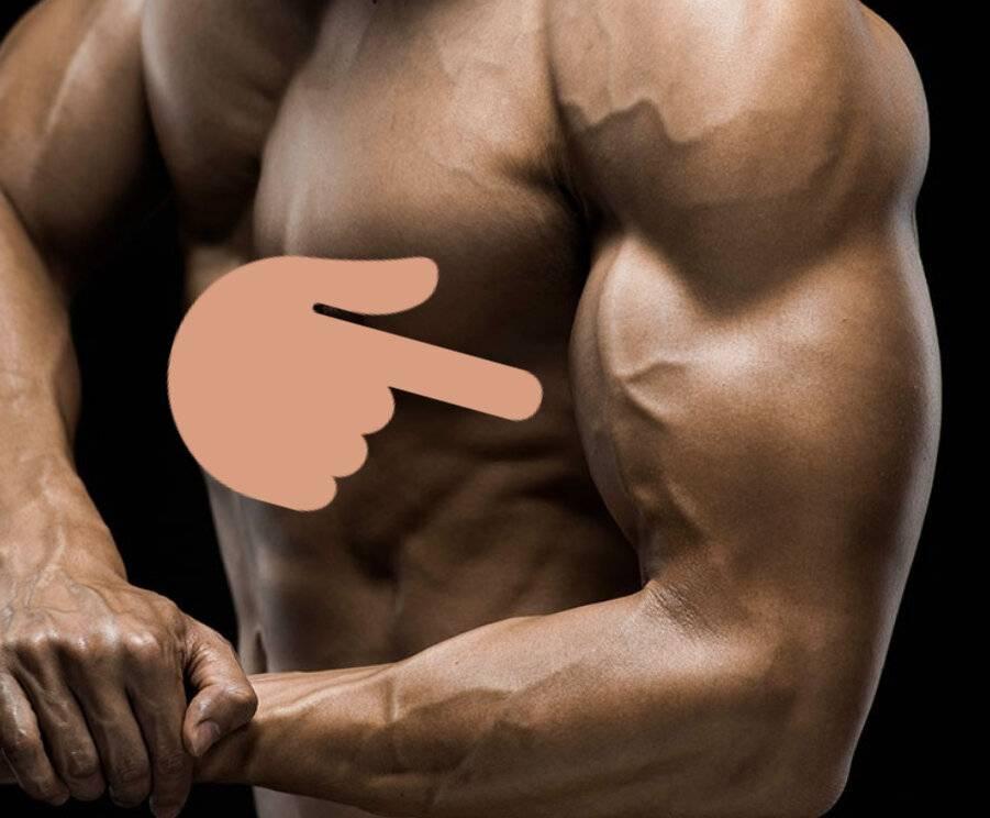 Время и предел роста мышц