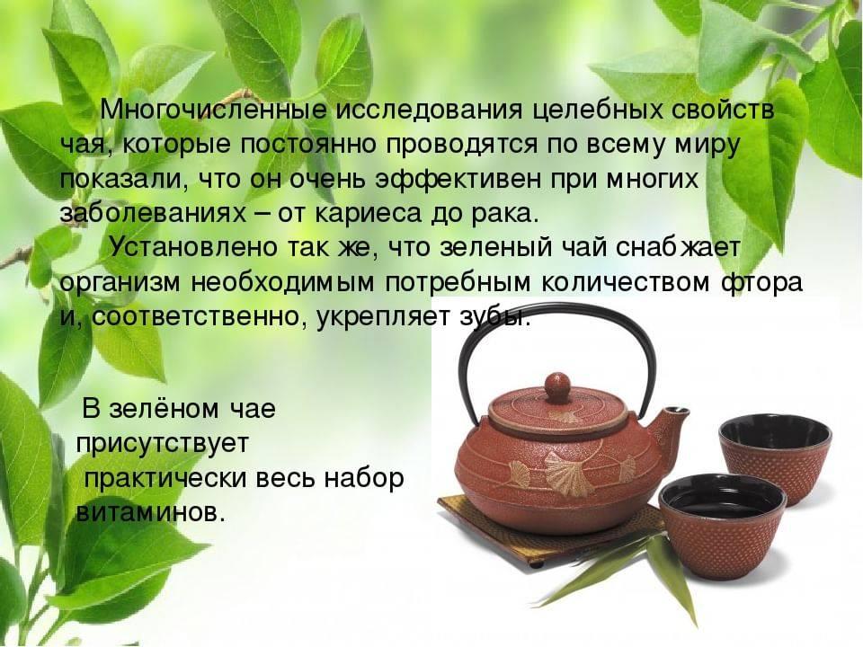 Польза и вред от зеленого чая для здоровья