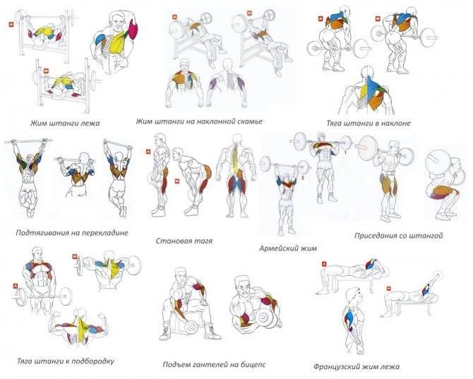 5 упражнений для любого возраста, укрепляющих все группы мышц