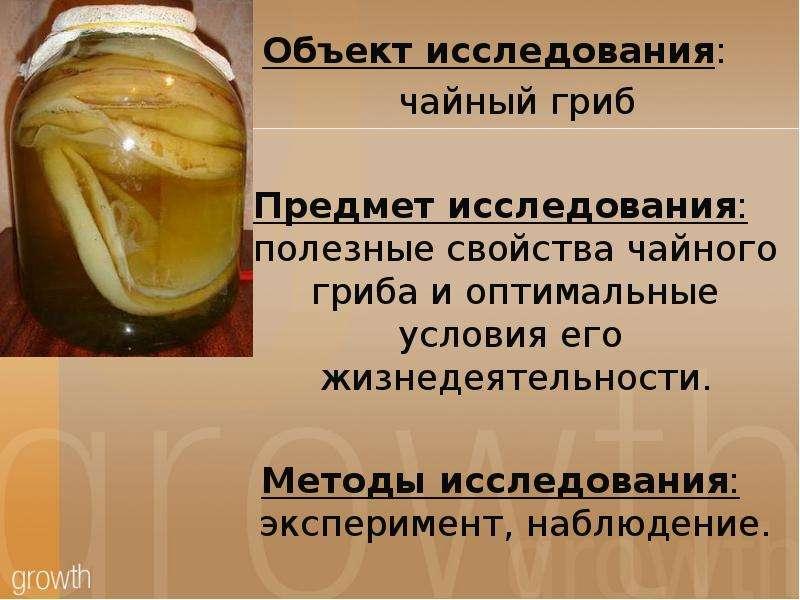Чайный гриб: полезные и вредные свойства   food and health