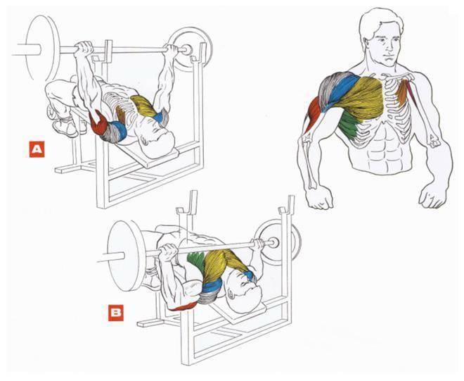 Как накачать мышцы груди. 6 эффективных программ