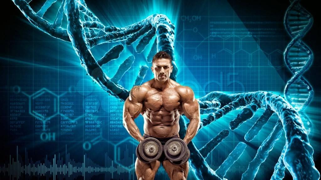 Важна ли генетика для занятия фитнесом и бодибилдингом?