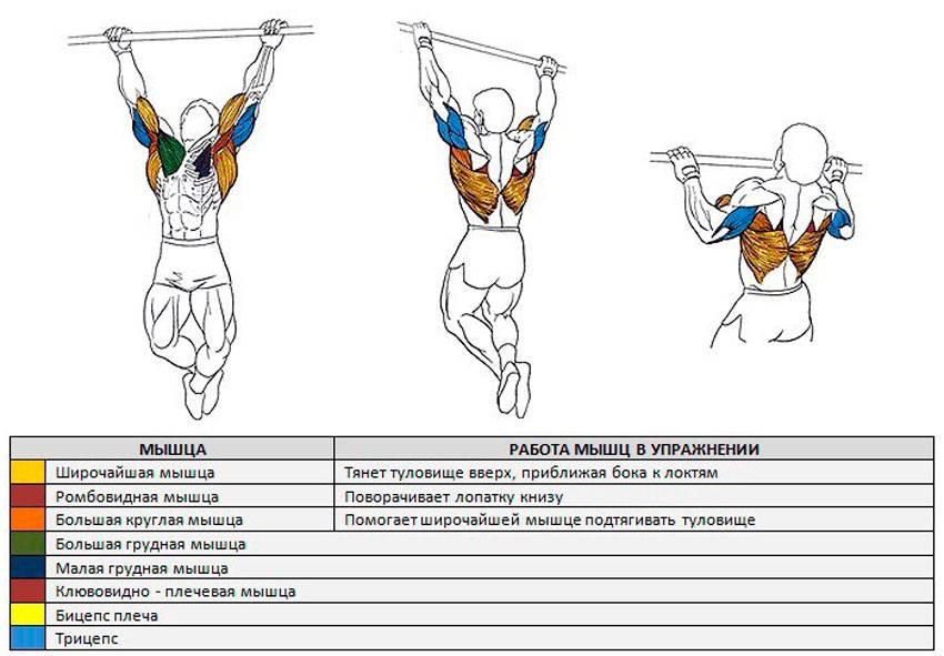 Как накачать мышцы спины эффективно и быстро в зале и дома, лучшие упражнения и подборка программ тренировок
