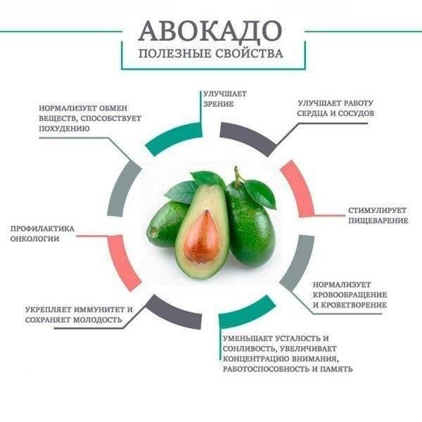 Авокадо: польза и вред для организма, как его едят