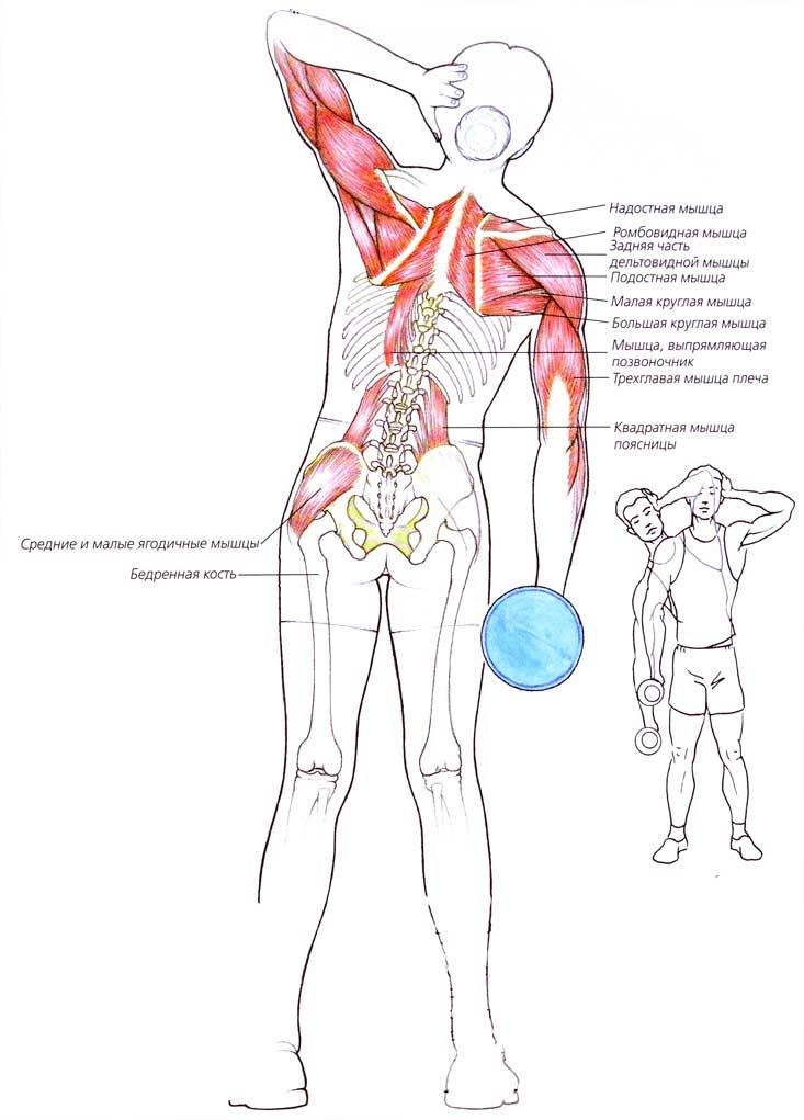 Боковые наклоны с гантелями: техника выполнения, какие мышцы работают