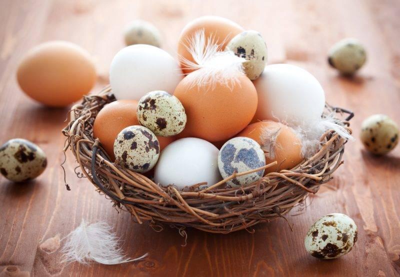 Можно ли есть перепелиные яйца при повышенном холестерине?