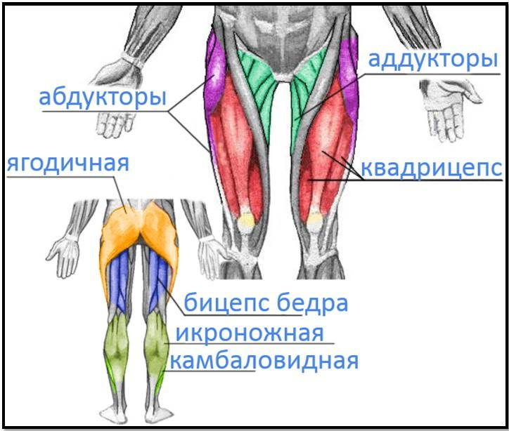 Отводящая мышца бедра укрепить. отводящие мышцы бедра