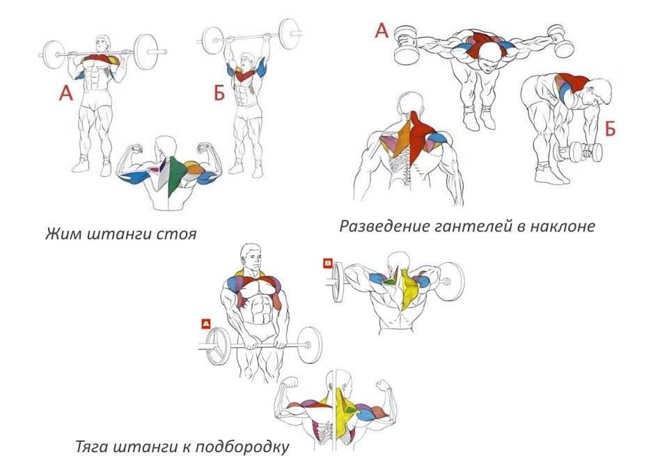 Порядок выполнения упражнений в тренажёрном зале | бомба тело