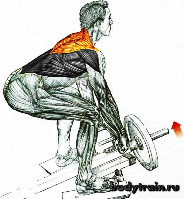 Тяга штанги в наклоне к поясу прямым и обратным хватом: техника выполнения