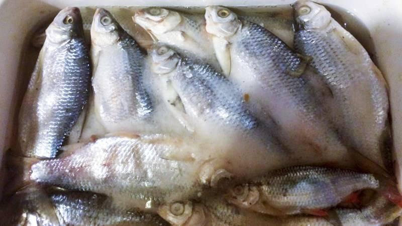 Сколько соли на кг рыбы (мерная таблица) - food-wiki.ru