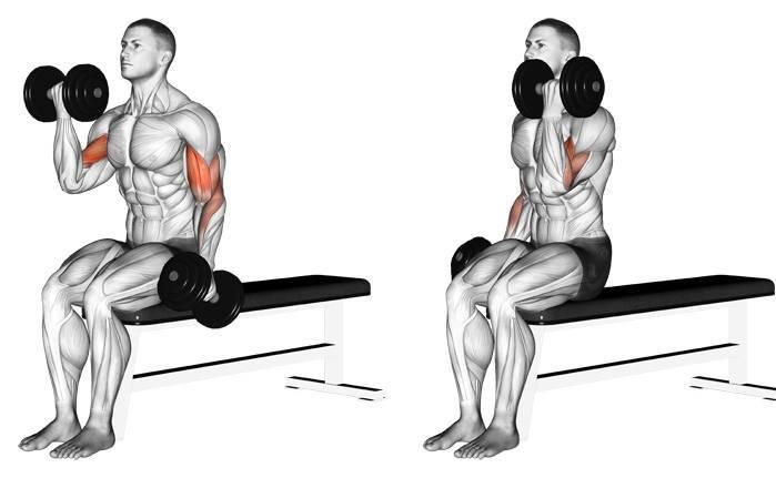 Тренировка трицепсов с гантелями: 4 упражнения. • bodybuilding & fitness