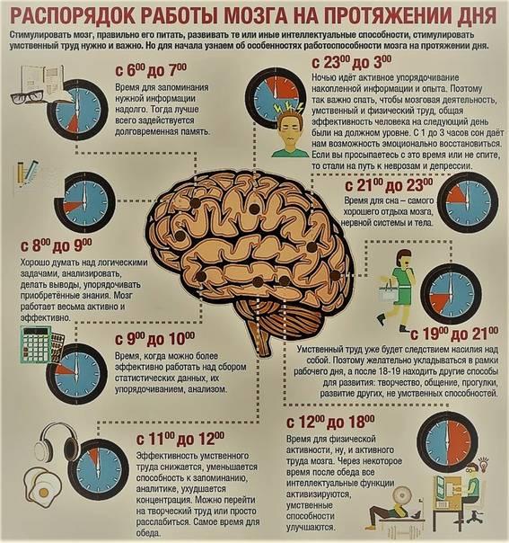 Полезные продукты для работы мозга   блог 4brain