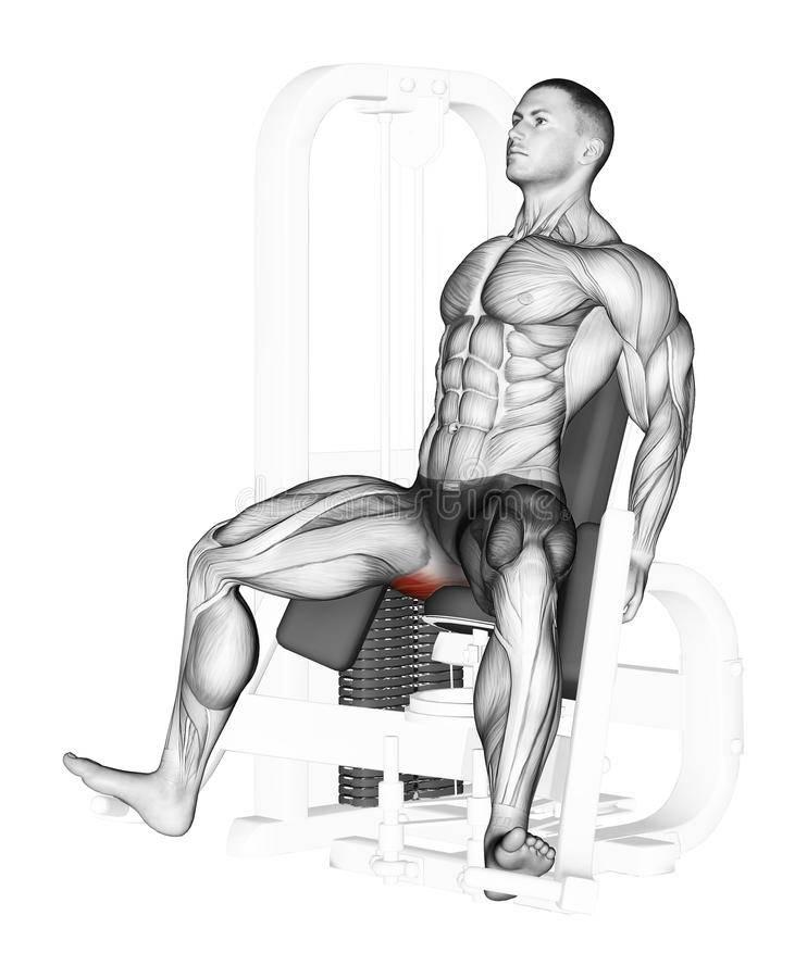 Разведение ног в тренажере – sportfito — сайт о спорте и здоровом образе жизни