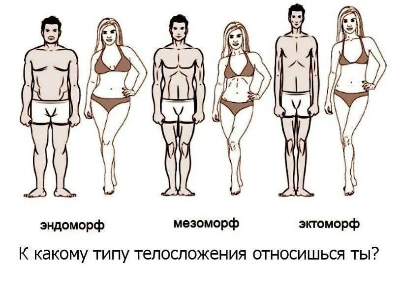 Основные типы телосложения у женщин: как определить?