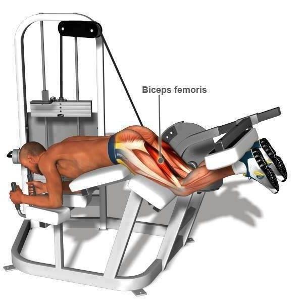Как правильно делать сгибание ног лежа в тренажере?