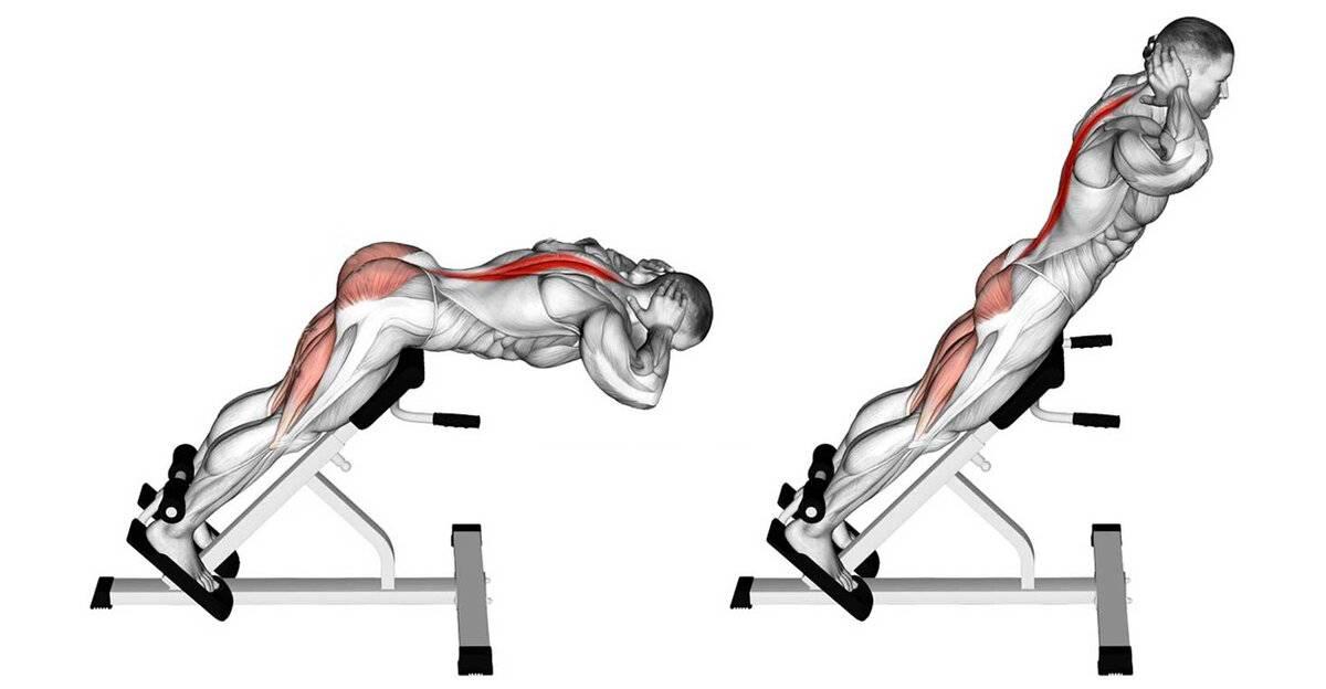 Как заниматься дома, чтобы качать мышцы спины?