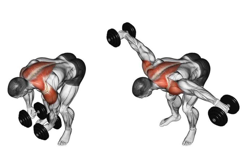 Развиваем рельеф плеча: разведение гантелей в наклоне | rulebody.ru — правила тела
