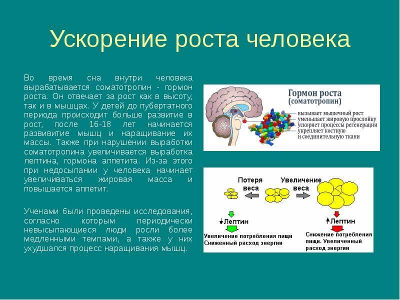 Описание и действие гормона роста