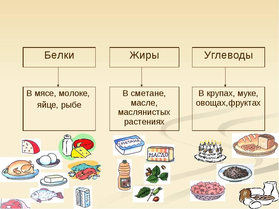 Питательные вещества. белки, жиры и углеводы