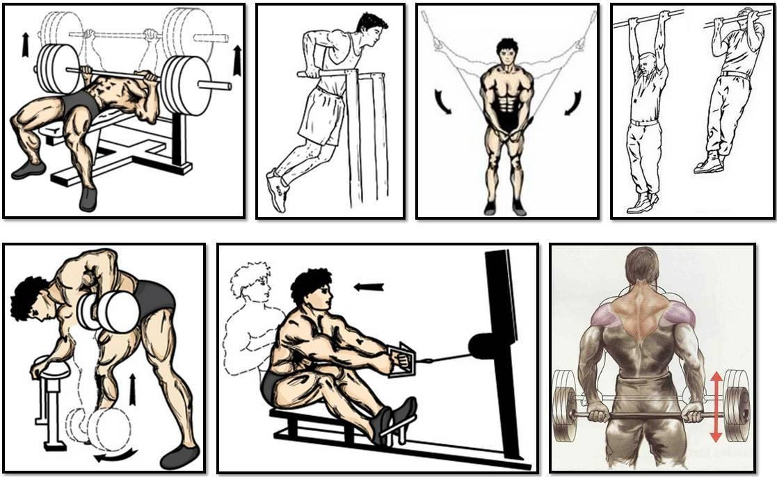 Какие мышцы можно качать в один день. какие мышцы следует тренировать вместе? | здоровье человека