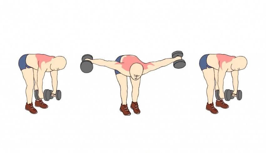 Топ-5 лучших упражнений для прокачки задней дельты