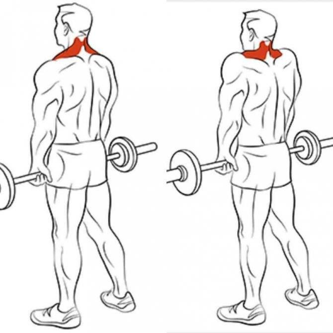 Шраги со штангой. упражнение для трапеций и для здоровья | bestbodyblog.com