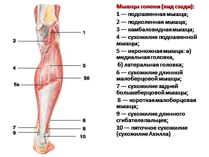 Как качать ноги. качаем ноги в тренажерном зале   musclefit