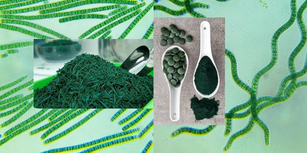 Морские водоросли - медицинский портал eurolab