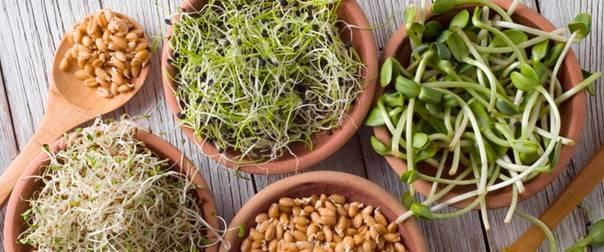 Соевые проростки – универсальный продукт питания