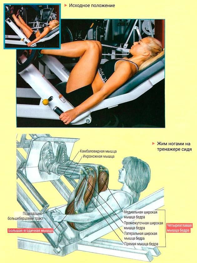 Жим ногами лёжа. как проработать ноги со всех сторон