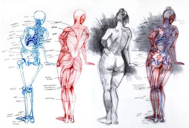Пампушки vs худышки: какие женские фигуры на самом деле нравятся мужчинам?