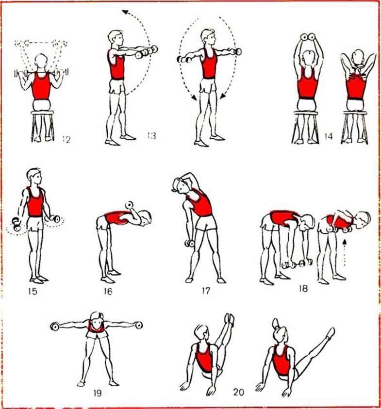 Подборка упражнения с гантелями для девушек на все группы мышц и их сочетание в комплексы