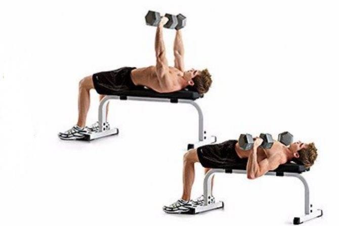 Жим гантелей на скамье: техника выполнения жима на горизонтальной скамье на грудные мышцы