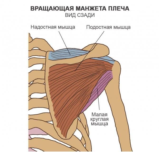 Лечение надостной мышцы плеча