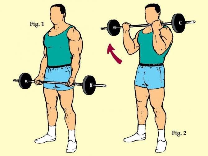 Сгибание рук со штангой стоя: полный обзор упражнения | rulebody.ru — правила тела