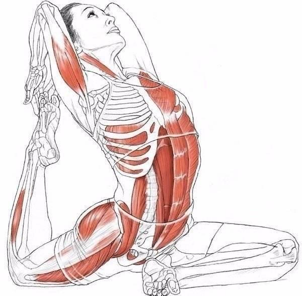 Упражнения на растяжку мышц брюшного пресса, нижней части поясницы и тазового пояса на большом валике или полу мяче. уникальная гимнастика «умная вода» для спины и суставов