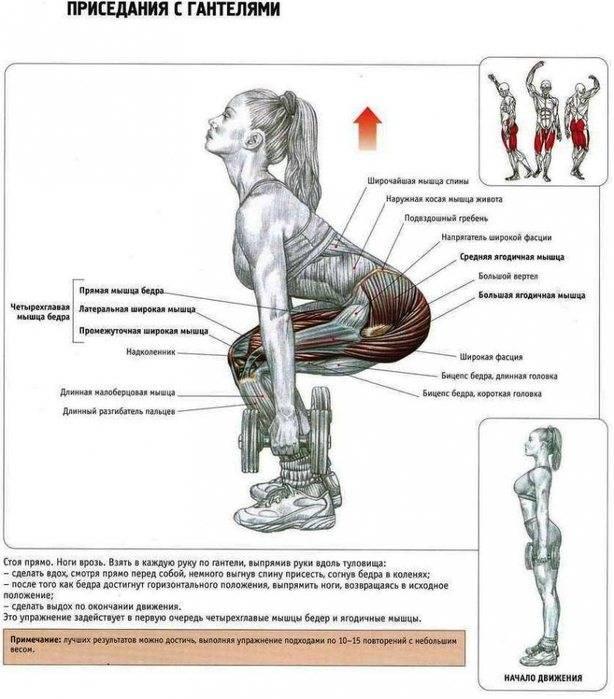 Какие мышцы работают при выполнении приседаний?