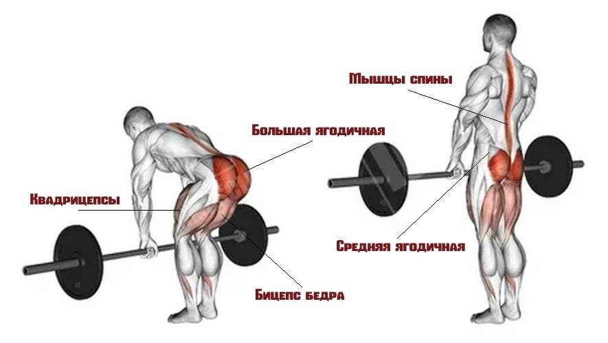 Румынская тяга со штангой