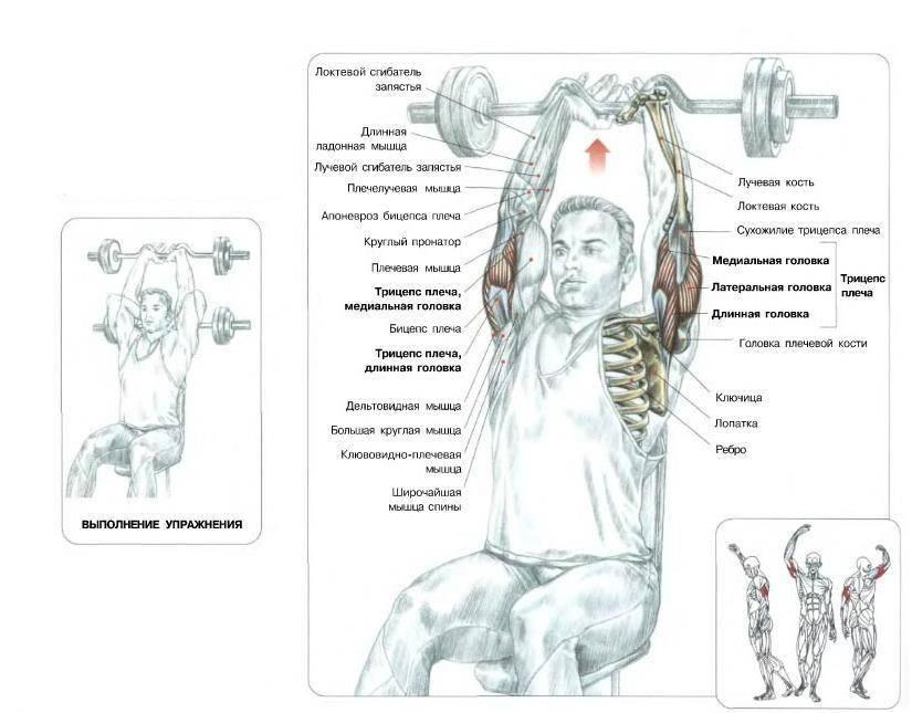 Жим с гантелями: техника выполнения французского жима, действие на мышцы, подбор инвентаря
