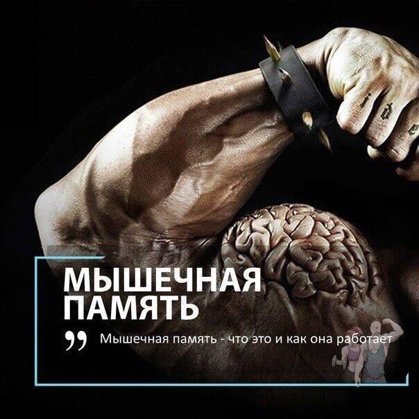 Cуществует ли мышечная память?   спортнаука