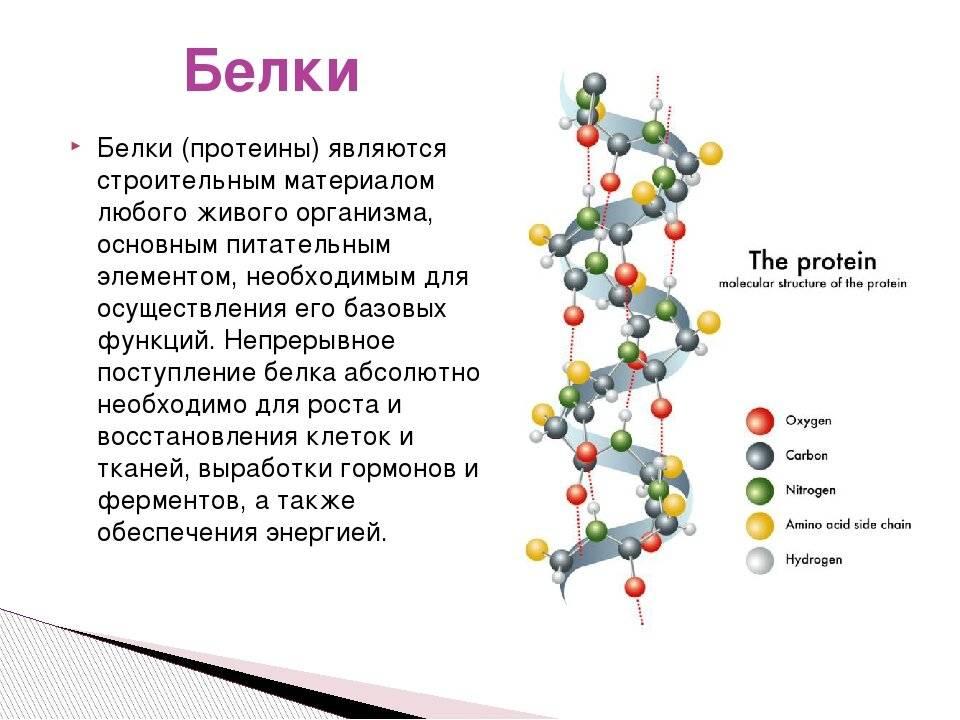 Изолейцин: где содержится аминокислота, как применяется, цена
