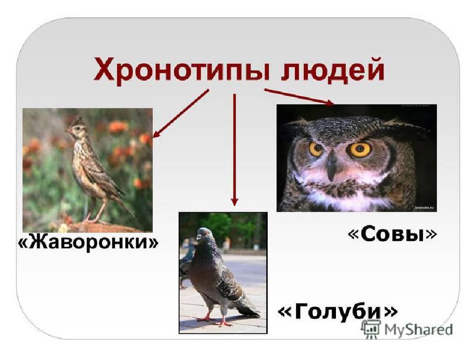 Почему совам не стать жаворонками?