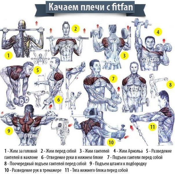 Будь как халк: 8 лучших упражнений на плечи в тренажерном зале