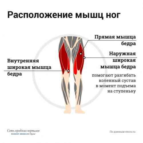 Бедро человека | анатомия бедра, строение, функции, картинки на eurolab