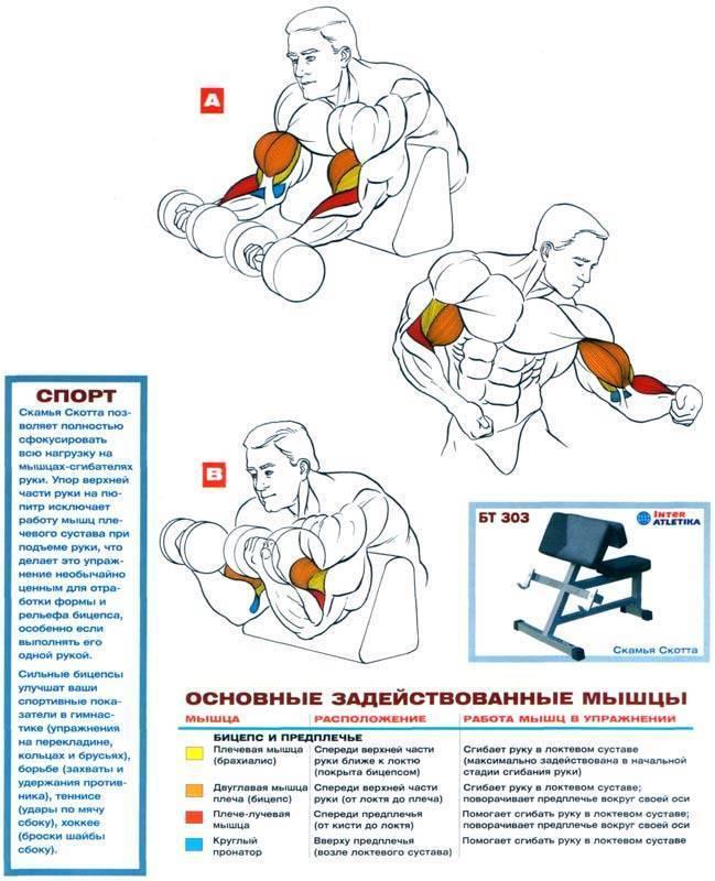 Самые эффективные упражнения на бицепс