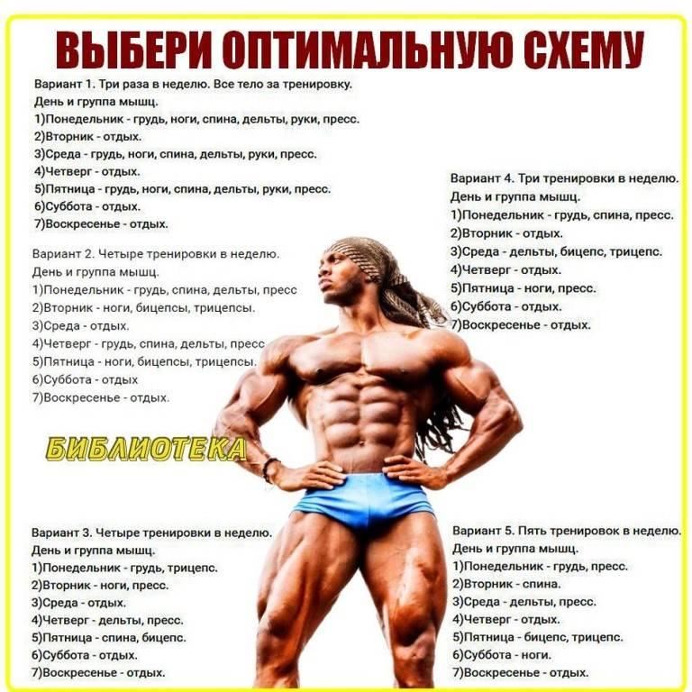 Особенности силовых тренировок для эндоморфов