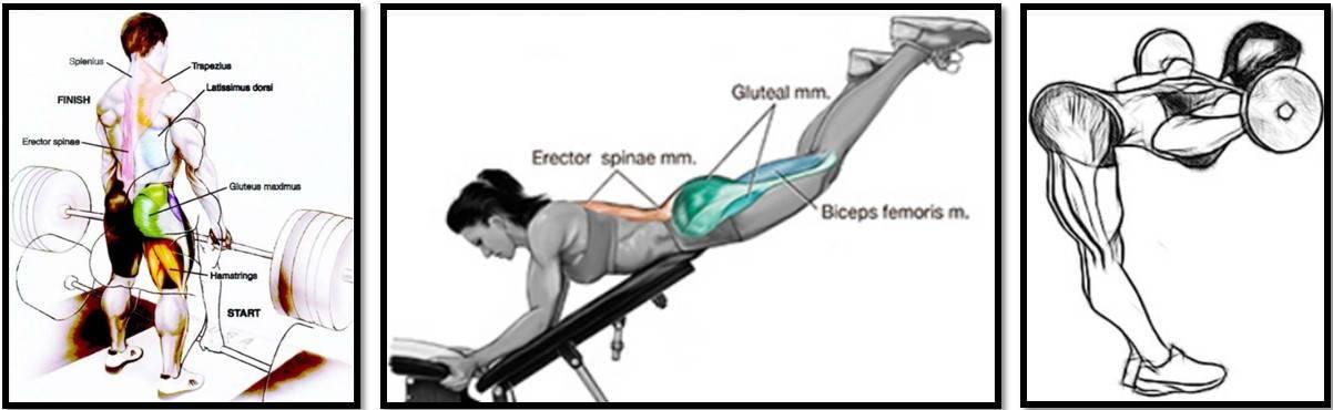 Базовые и изолирующие упражнения для мышц спины